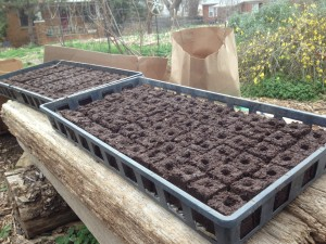 Trays full of soil blocks