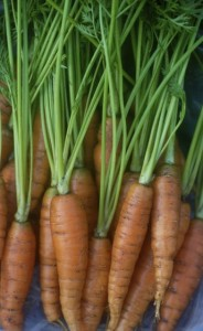 carrots, June