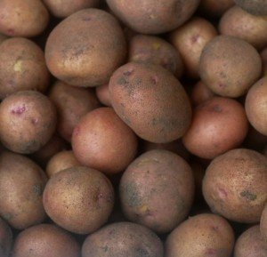 potatoes, red gold