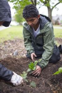 Benito planting@ lo-res