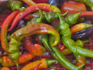 peppers, jimmy nardello