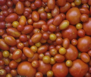 tomatoes, July