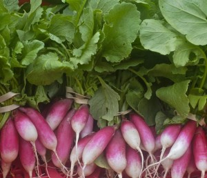 radishes, french bkfst